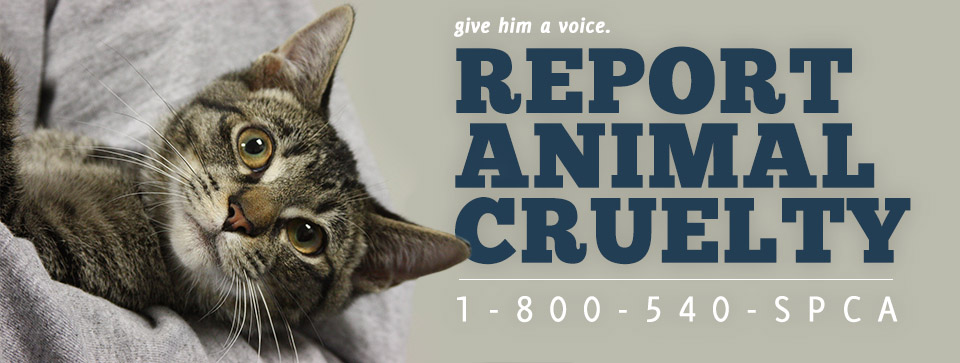 Report Animal Cruelty