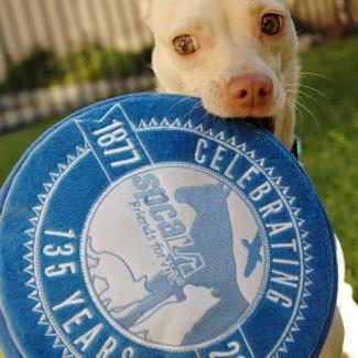 tan dog holding blue spcaLA frisbee