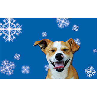 blue background with snowflakes and tan and white dog