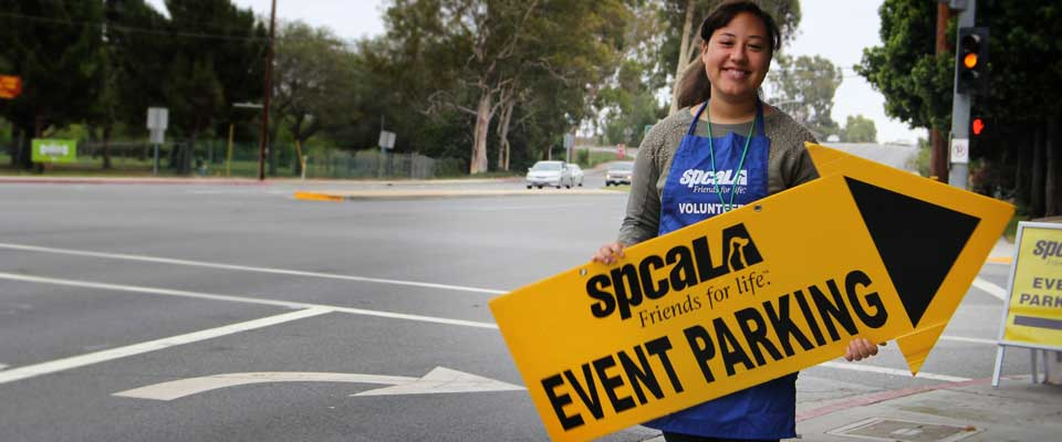 Woman wearing blue spcaLA volunteer apron holding yellow event parking arrow sign standing next to the street