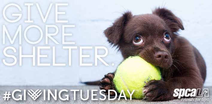 GiveMoreShelter-DonatePage-Dog
