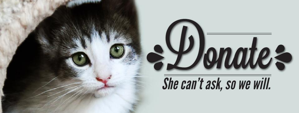 Donate-Cat