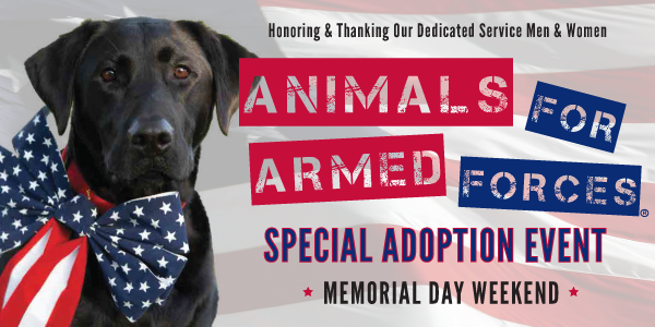 Black lab with flag patterned bow tied around its neck. Text: Honoring & thanking our dedicated service men & women. Animals for armed forces special adoption event. Memorial Day Weekend.