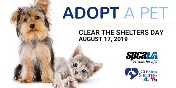 Adopt a Pet. Clear the Shelters Day August 17, 2019. spcaLA logo and Clear the Shelters NBC4 Telemundo 52 logo. Shih Tzu puppy and grey kitten sitting side by side.