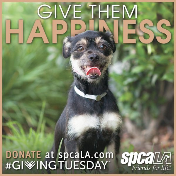 Small black and brown terrier in front of greenery with text 'Give Them Happiness. Donate at spcaLA.com #givingtuesday' and white spcaLA logo