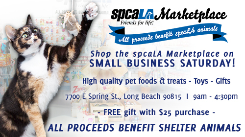 Torbi cat swiping hanging toy in front of marketplace background with spcaLA Marketplace logo and text 'Shop the spcaLA Marketplace on Small Business Saturday. High quality pet foods & treats - toys - gifts. 7700 E Spring St, Long Beach 90815 9am-4:30pm. Free gift with $25 purchase. All proceeds benefit shelter animals'