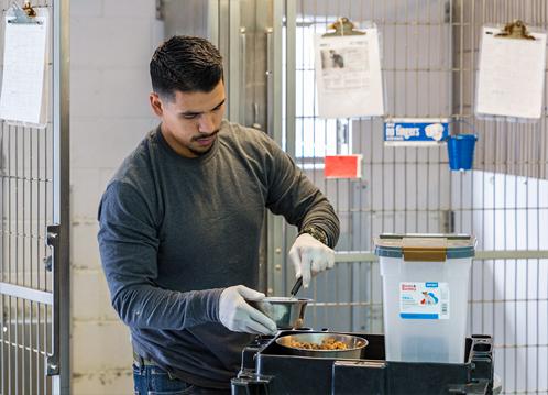 spcala worker feeding dogs