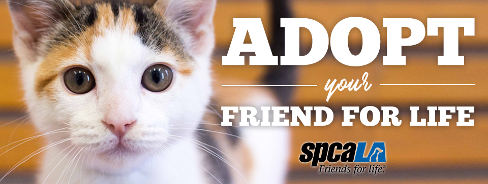 adopt your friend for life kitten