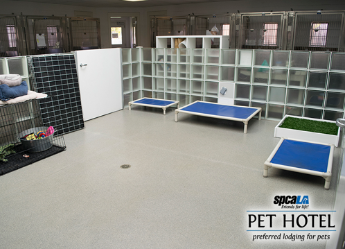 indoor doggie playplace