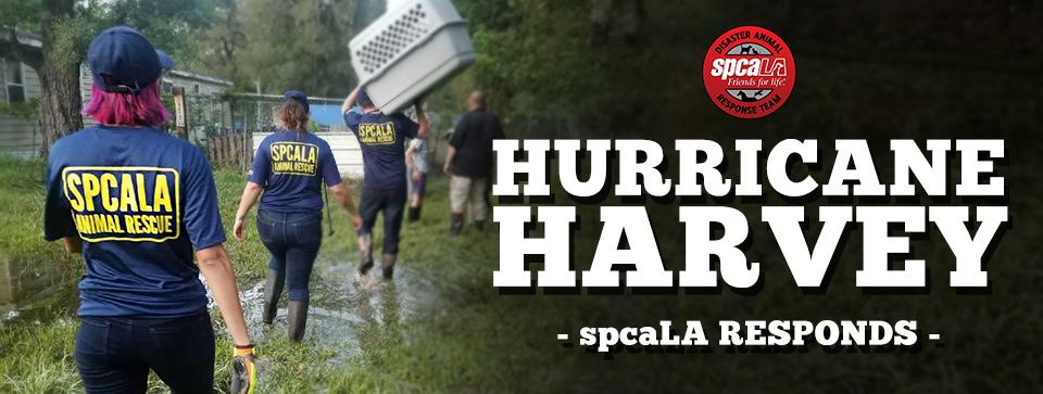 spcala responds to harvey