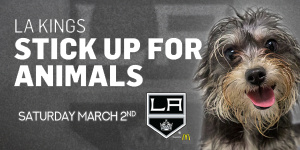 Gray terrier against a gray background. LA Kings Stick up for Animals Saturday March 2nd.