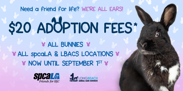 Need a friend for life? We're all ears! $20 Adoption Fees* all bunnies all spcaLA & LBACS locations now until September 1st. spcaLA logo and LBACS logo. Black rabbit sitting in front of blue and pink gradient background.