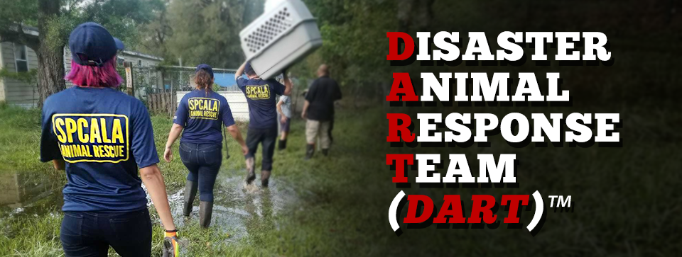 Disaster Animal response Team (DART) animal rescue