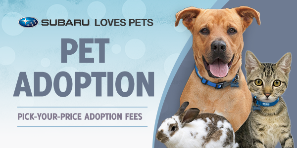 Subaru Loves Pets Pet Adoption. Pick-your-price adoption fees. Large brown dog with tongue out sitting next to tabby kitten and white and brown bunny.