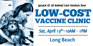 spcaLA & LB Animal Care services host a Low - Cost Vaccine Clinic spcaLA Vet staff holding a shelter dog. Blue and white graphic for a low cost vaccine clinic. Saturday, April 13 from 10 am - 1 pm in Long Beach.