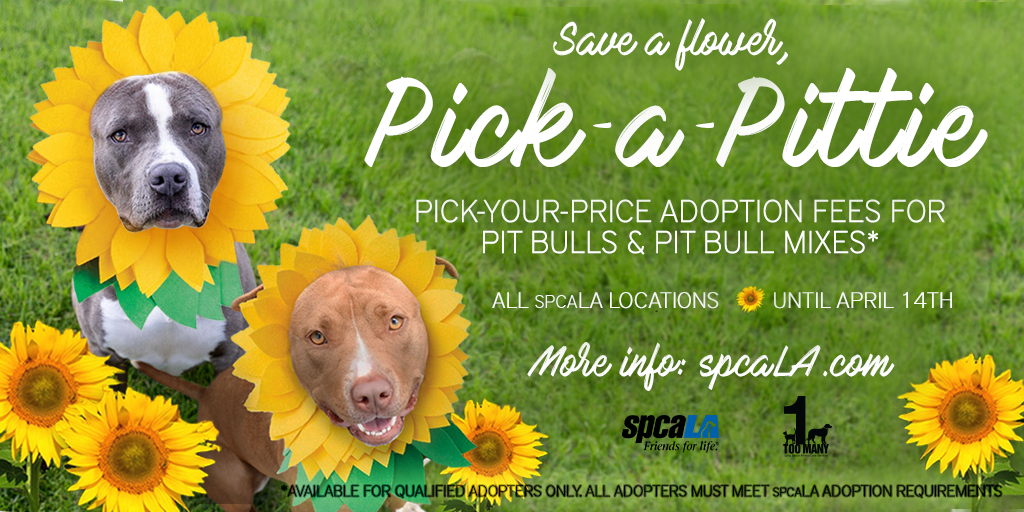 Text: PICK-YOUR-PRICE ADOPTION FEES FOR PIT BULLS & PIT Mixes. ALL SPCALA LOCATIONS UNTIL APRIL 14TH. Picture of 2 pit bull mixes outsie with sunflowers around them.