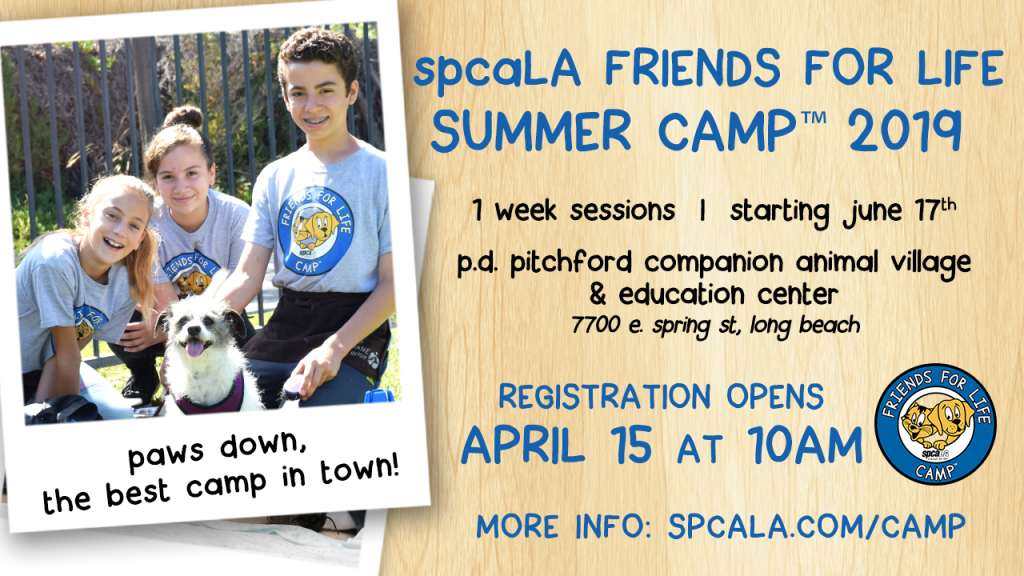 spcaLA Friends For Life Summer Camp 2019. 1 week sessions starting June 17th. P.D. Pitchford Companion Animal Village & Education Center. 7700 E. Spring St, Long Beach. Registration Opens April 15 at 10am. More info: spcaLA.com/camp. Cartoon cat and dog inside a blue circle logo. Campers outside with a shelter dog photo.