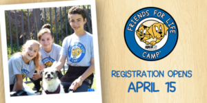 spcaLA Friends for Life Camp Logo with an animated cat and dog inside a blue circle. Campers outside with a shelter dog.