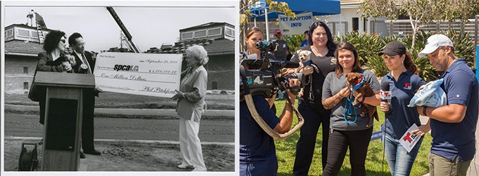 Left: Phil Pitchford presents Madeline Bernstein and Betty White with the first 1 million dollar donation to build the Village (2000); Right: spcaLA & LBACS joint Telemundo interview during adoption event, Clear the Shelters (2017)
