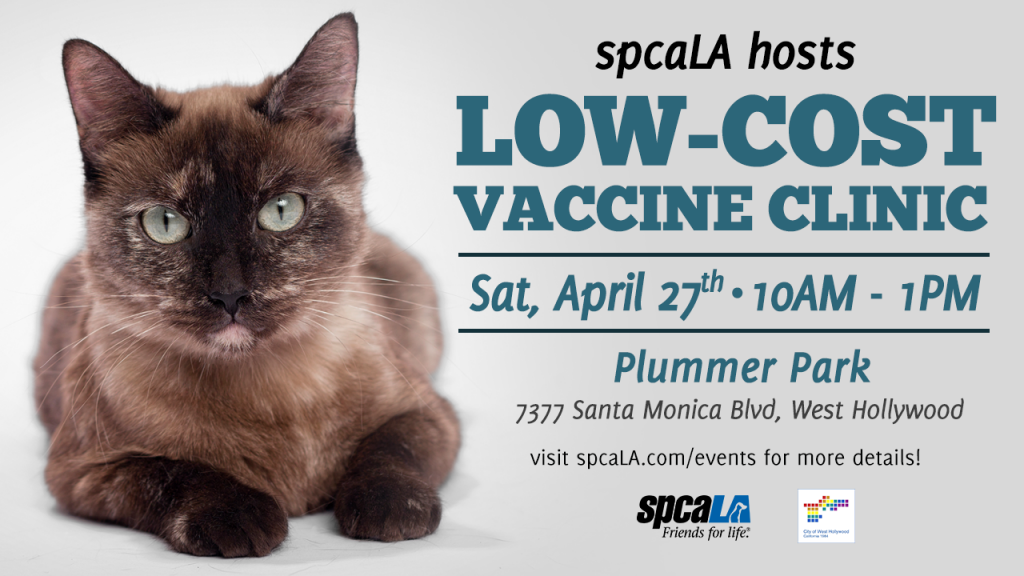 spcaLA hosts Low Cost Vaccine Clinic Sat, April 27 10am-1pm. Plummer Park. 7337 Santa Monica Blvd, West Hollywood. Visit spcaL.com/events for more details. spcaLA logo and West Hollywood city logo. Text next to Siamese cat laying down on white background