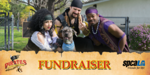 Photo of 3 pirate actors kneeling with grey shelter dog. Pirates Dinner Adventure Logo, spcaLA logo, and Fundraiser text