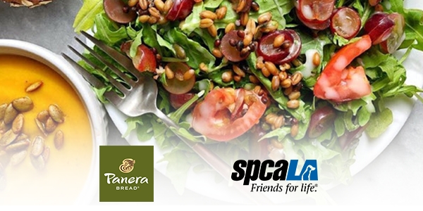 Plate of salad next to bowl of yellow soup. Panera Bread logo and spcaLA logo