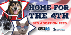 Home for the 4th $20 adoption fees text with spcaLA logo and LBACS logo. Shepherd mix dog, black and white rabbit, and grey kitten with sunglasses in star cutouts in front of American flag background.