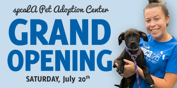 spcaLA Pet Adoption Center Grand Opening Saturday, July 20th. Woman in blue Team spcaLA tshirt holding large black puppy in her arms.