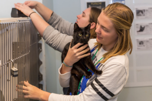 Young female volunteer holding black cat on her chest standing in front of cat kennel.