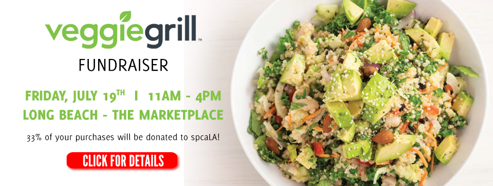 Photo of Avocado Cesar salad.Text: Veggie Grill Fundraiser. Friday, July 19th 11am-4pm Long Beach-The Marketplace. 33% of your purchases will be donated to spcaLA!