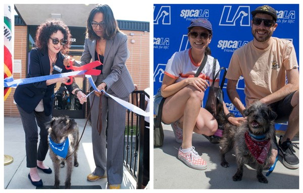 spcaLA President Madeline Bernstein and Assemblymember Sydney Kamlager-Dove cut blue and white ribbon with red scissors as grey dog watches below. Young couple kneels down next to grey dog they adopted.