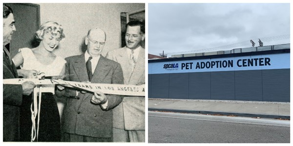 Black and white photo of Doris Day cutting ribbon with officials around her. Color photo of spcaLA Pet Adoption Center building wall.