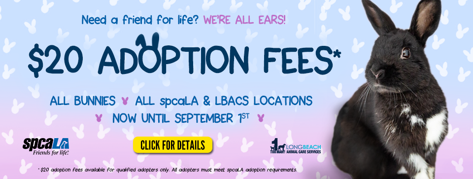 Need a friend for life? We're all ears! $20 Adoption Fees* all bunnies all spcaLA & LBACS locations now until September 1st. spcaLA logo and LBACS logo. Click for details button. Black rabbit sitting in front of blue and pink gradient background.