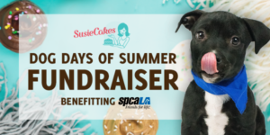 SusieCakes logo. Dog Days of Summer Fundraiser benefitting spcaLA. Black puppy licking its nose. Blue background with cupcakes and blankets.