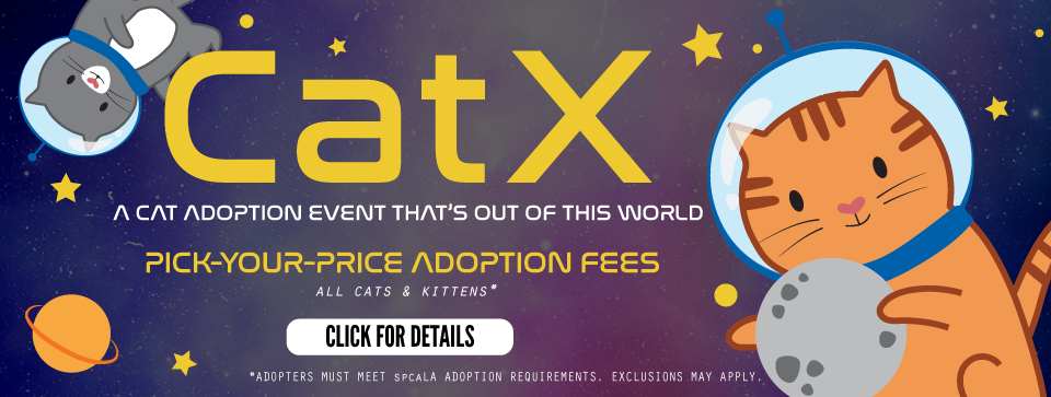 CatX. A cat adoption event that's out of this world. Pick your price adoption fees all cats & kittens. Click for details button. Cartoon cats in astronaut helmets floating around planets and stars in a purple galaxy.