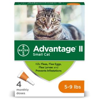 small cat advantage