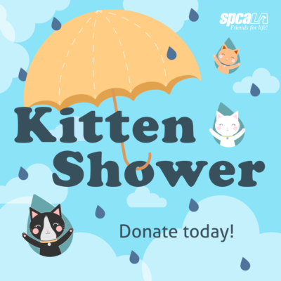 Kitten Shower with yellow umbrella and kitties falling in raindrops from the sky